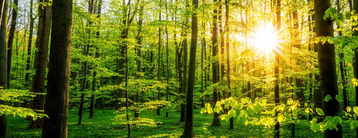 Fenster Wald